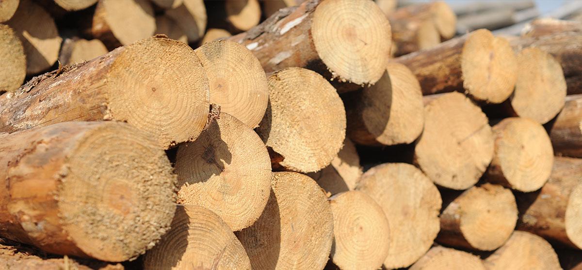 木质材料源头控制